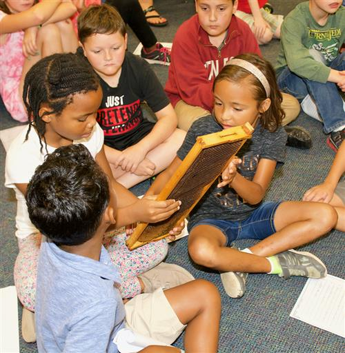 Bees buzz in summer school lesson for Thayer students
